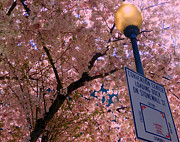 Lightposts Prints - Springtime In Charlotte Print by Lydia Holly