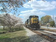 Cherry Blossoms Photo Originals - Springtime in Conyers Ga by Stuart Lodge