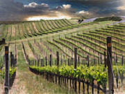 California Vineyard Digital Art Prints - Springtime in Napa Valley Print by Karen  Burns
