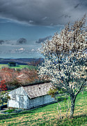 Cabin Wall Framed Prints - Springtime in the Blue Ridge Mountains I Framed Print by Dan Carmichael