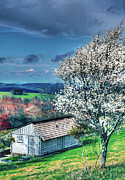 Shed Acrylic Prints - Springtime in the Blue Ridge Mountains II Acrylic Print by Dan Carmichael