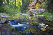 Oak Creek Prints - Springtime in the Canyon Print by Peter Coskun