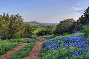 Blue Bonnets Posters - Springtime in the Hill Country Poster by Cathy Alba