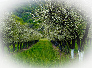 Bill Galagher Prints - Springtime in the Orchard Print by Bill Gallagher