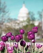 Kim Fearheiley - Springtime in Washington...