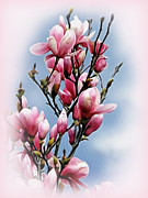 Soft Digital Art - Springtime Magnolia by Kaye Menner