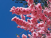Springtime Pink Print by Kaye Menner