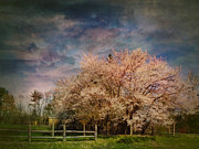 Red Bud Trees Posters - Springtime Red Bud Tree  Poster by Pamela Phelps