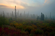 Sunrise Photos - Spruce Spirits by Ron Day
