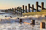 Coastline Prints - Spurn Point Sea Defence Posts Print by Colin and Linda McKie