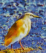 Surreal Landscape Painting Metal Prints - Squacco heron Metal Print by George Rossidis