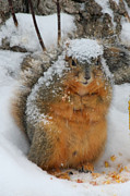 Lori Tordsen Art - Squirrel covered in snow by Lori Tordsen