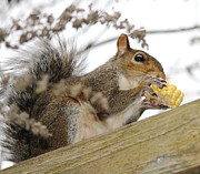 Cathy Lindsey - Squirrel Eating Corn