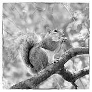 Squirrel Digital Art Metal Prints - Squirrel in a Tree - Black and White Metal Print by Natalie Kinnear
