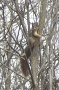 Eddie Armstrong Art - Squirrel in a Tree by Eddie Armstrong