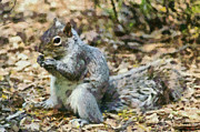 Squirrel In Central Park Print by George Atsametakis