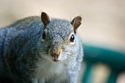 Kamgeek Photography - Squirrel