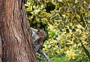 Kate Brown - Squirrel