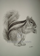 Kuntal Chaudhuri - Squirrel