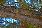 Allen Sheffield - Squirrel Looking Down on Viewer