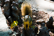 Nature Photos - Squirrel by Nathan Hillis