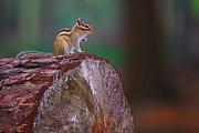 Nick  Biemans - Squirrel on a tree