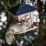 Sitting Photo Posters - Squirrel on bird feeder Poster by Elena Elisseeva