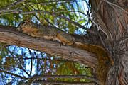 Allen Sheffield - Squirrel Plays Possum