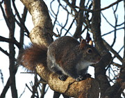 Xcape Photography - Squirrel Searching For...