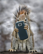 Squirrel With Cellphone Print by Mike Agliolo