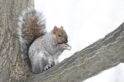 Kathy Rinker - Squirrel with Peanut