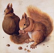 Nuts Paintings - Squirrels by Albrecht Duerer