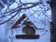 Squirrel Mixed Media - Squirrels House - Covered with Fresh Snow by Photography Moments - Sandi