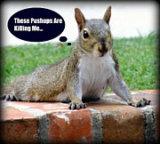 Funny Animals Prints - Squirrely Push Ups Print by Karen Wiles