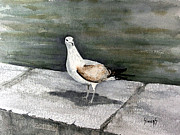 Gull Paintings - St Augustine Gull by Sam Sidders