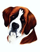 Portraiture Drawings Prints - St. Bernard Print by Danielle Haney
