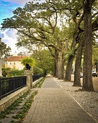 Nola Prints - St Charles Live Oak Trees Print by Ray Devlin