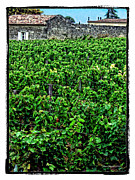 Merlot Prints - St. Emilion Winery Print by Joan  Minchak