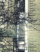 St John's Ladder Print by Sarah Loft