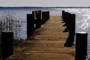 Dock Prints - St Johns River FLorida - A chain of lakes Print by Christine Till
