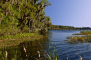 Live Oak Prints - St Johns River Florida Print by Christine Till