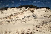 Florida Panhandle Prints - St. Joseph Sand Dunes Print by Adam Jewell