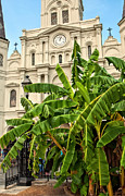 Kathleen K Parker - St. Louis Cathedral and...