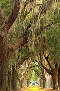 Adam Jewell - St Simons Island Oaks