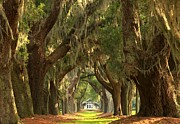 Adam Jewell - St Simons Oaks