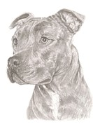Staffie Prints - Staffordshire Bull Terrier Print by Rebecca Vose