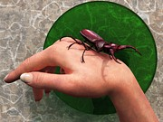 Daniel Eskridge - Stag Beetle On Hand