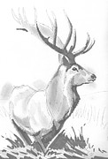 Mike Jory - Stag Drawing