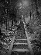 Oklahoma Landscapes Posters - Stairway in the Woods Poster by Tina Miller