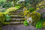 Ghose Framed Prints - Stairway To The Secret Garden Framed Print by Priya Ghose
